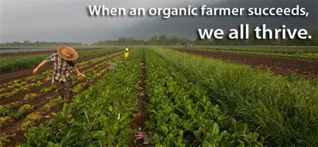 essay on organic farming Check out our top free essays on argument essays organic farming to help you write your own essay.