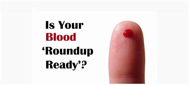 Blood roundup ready