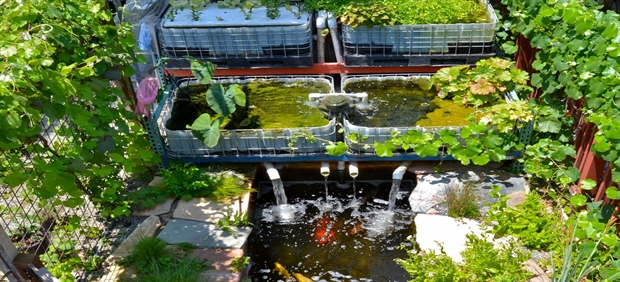 aquaponics-pond620_June2013