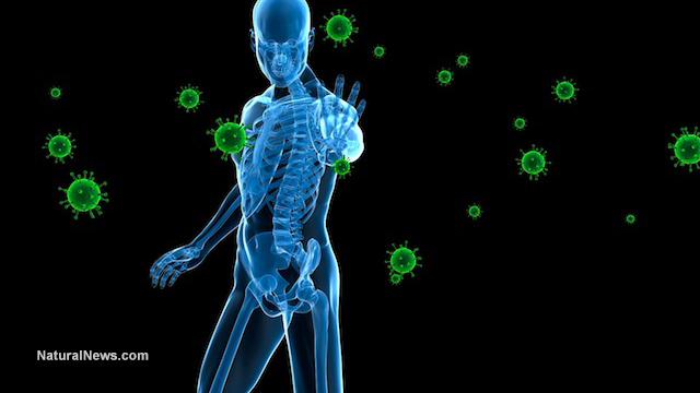 Immune-Body-Disease-Bacteria