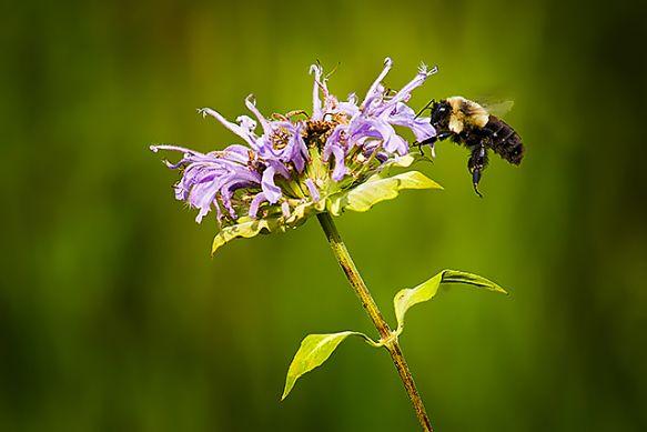 beespesticides