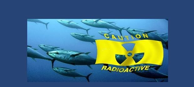 Fish Fukushima 1