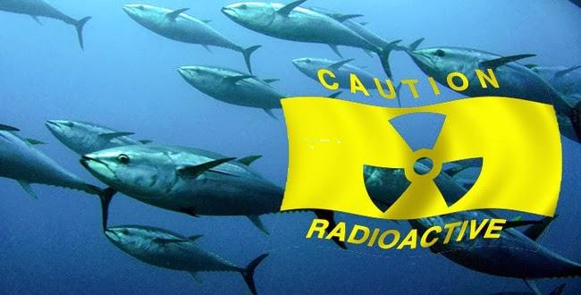 Fish Fukushima