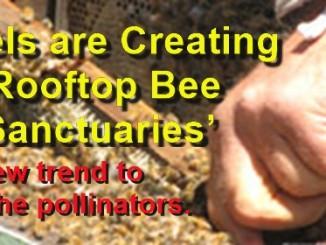 fairmont bees meme 4 27 16