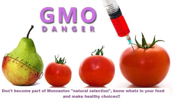 GMO-Dangers