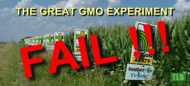 GMO Experiment 1