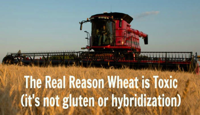 The-Real-Reason-Wheat-is-Toxic-its-not-the-gluten