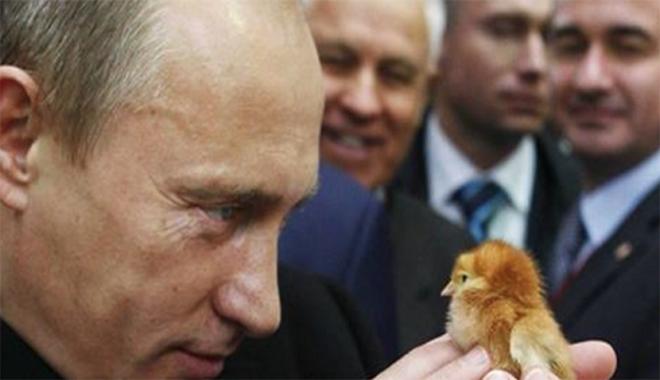 Putin, Russia GMO ban