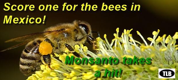 bees-meme-9-28-16