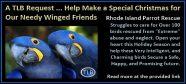 ri-parrot-rescue-1c