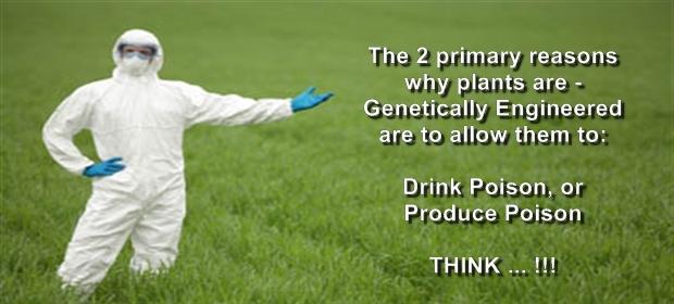 gmo-foods-risks