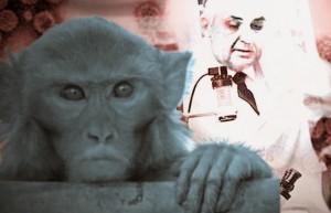 monkey-vaccine