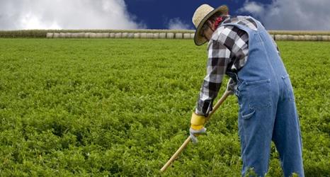 farm_crops-466