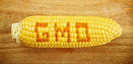GMO-corn-466