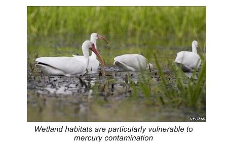 08.24.15 Wetland Habitats