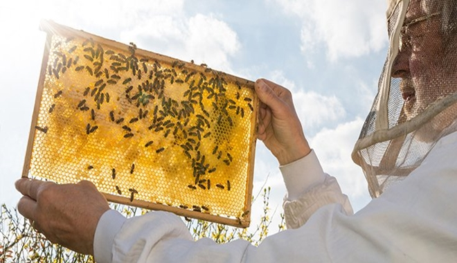 Man with bees 4 27 16
