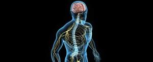 central-nervous-system-cns