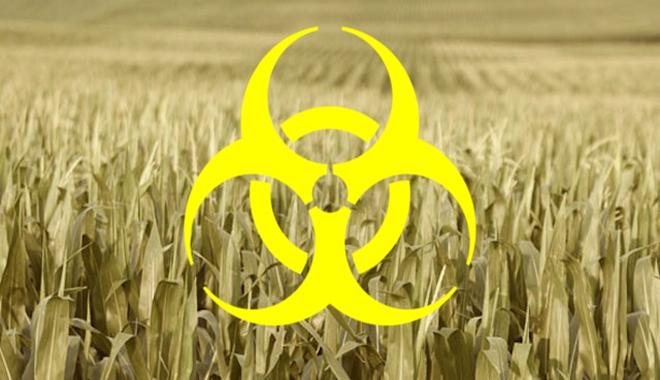 Corn-Fields-Crops-Agriculture-Monsanto-Biohazard