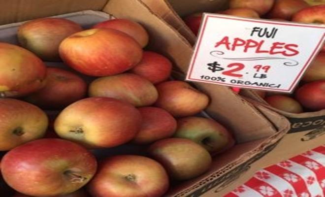 fuji-gmo-apple